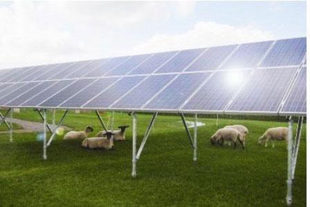 Atlantic Renewables Solar Panels Manchester Solar Farms